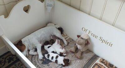 Pups geboren op 01-10-2020